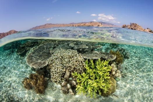 healthy-coral-reef-indo