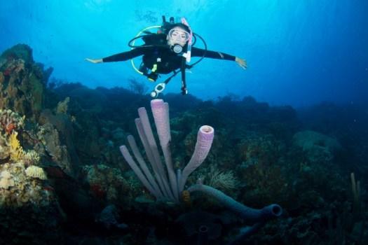 Bonaire Diver - Coral - ocean